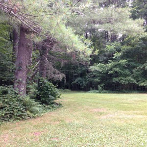 beautiful forest around the Colebrook Book Barn